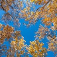 Люблю осень :: Владимир Гришин