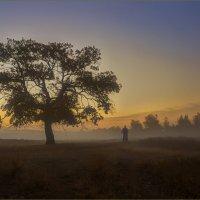 Утренняя пргулка :: Sashura Vysotsky