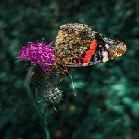 Бабочка :: Наталья Ерёменко