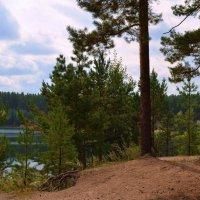 На берегу лесного озера :: Вера Андреева