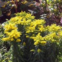 Жёлтые цветы :: Aнна Зарубина