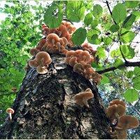 В осеннем лесу. :: Валерия Комова