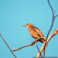 Знатоки, кто скажет что это за птица?) :: Богдан Петренко