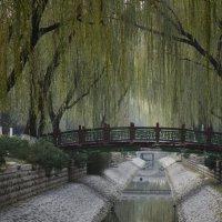 Пеки, парк :: Медведев Сергей