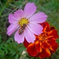 И осенью цветут цветы :: Елена Семигина