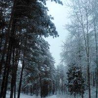 Не первый снег :: alex K