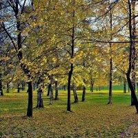 Золотые березки и осины... :: Sergey Gordoff