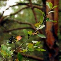 Осення природа-3 :: Михаил Новиков