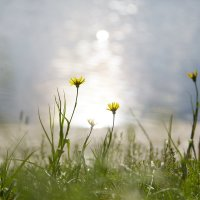 Приветствие Солнцу :: Лариса Фёдорова