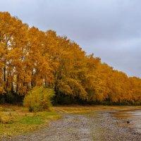 Осень в Сибири :: Владимир Гришин