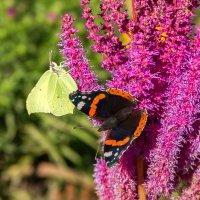 А бабье лето на крыльях бабочек летит... (20.09.17) :: Сергей В. Комаров