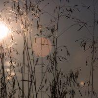 Солнце в паутине :: Александр Синдерёв
