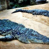 Голубые крокодилы! :: Натали Пам