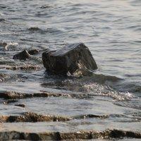 Пейзаж с камнем :: Михаил Юрьевич