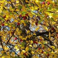 Райские яблочки :: Фотогруппа Весна.
