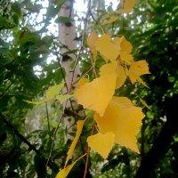 Золотая прядь осени :: Елена Семигина