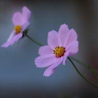 Цветы :: Татьяна Петрова