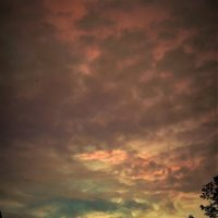 Evening :: Юлия Энвие