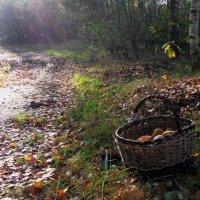 О грибной поре. :: Ирина Лебедева