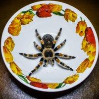Arachnophobia :: Роман Шершнев