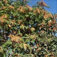 Сплетают ветви дерево и куст :: Нина Корешкова