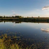 Вдоль озера :: Александр Синдерёв
