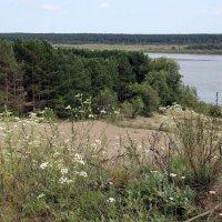 Берег реки Бия :: Олег Афанасьевич Сергеев