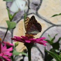 Цветок и бабочка :: Лина