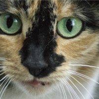 Кошка с зелеными глазами :: Марина Кириллова