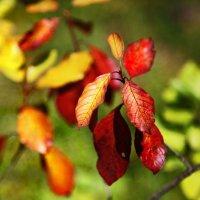 Осенние цвета :: Наталья
