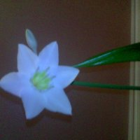 Растение :: Александр Ханис