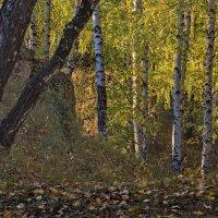 И в лесу бывают тоже горы. :: Михаил Полыгалов