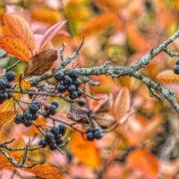 Красавица осень! :: Натали Пам