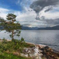 Дерево, море и облака. :: Sven Rok