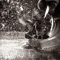 Купание голубей 3 :: Алена Афанасьева