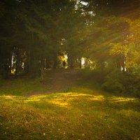 В лесу :: Андрей Н