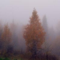 Утро туманное.. :: Татьяна Соловьева