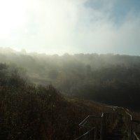 Туман ~~*~~ :: Алексей Медведев