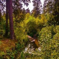 Лесной уголок :: Мария Богуславская