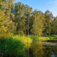 Прогулки по Ботаническому саду. :: Николай