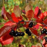 Танцует осень напоследок :: Нина северянка