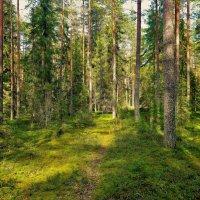 Грибной лес... :: Sergey Gordoff