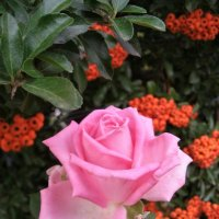 Краски осени :: svetlana.voskresenskaia