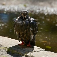 после бани :: linnud