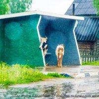 бабье лето :: Светлана Кузина
