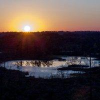 Закат на болоте :: Inga Engel