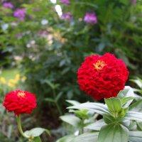 Осенние цветы... :: Galina Dzubina
