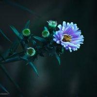 Цветы Сентября. :: Дмитрий Скубаков