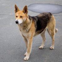 Уличныый пёс :: Den Ermakov
