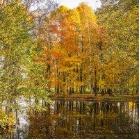 Уж осень на дворе... :: bajguz igor